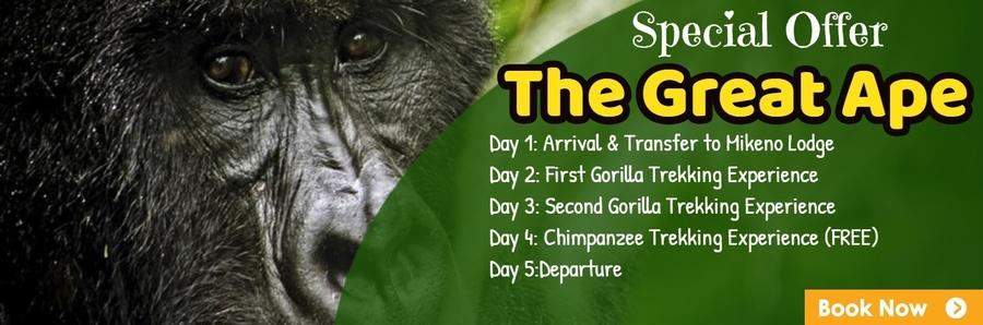 Congo gorilla safaris offer