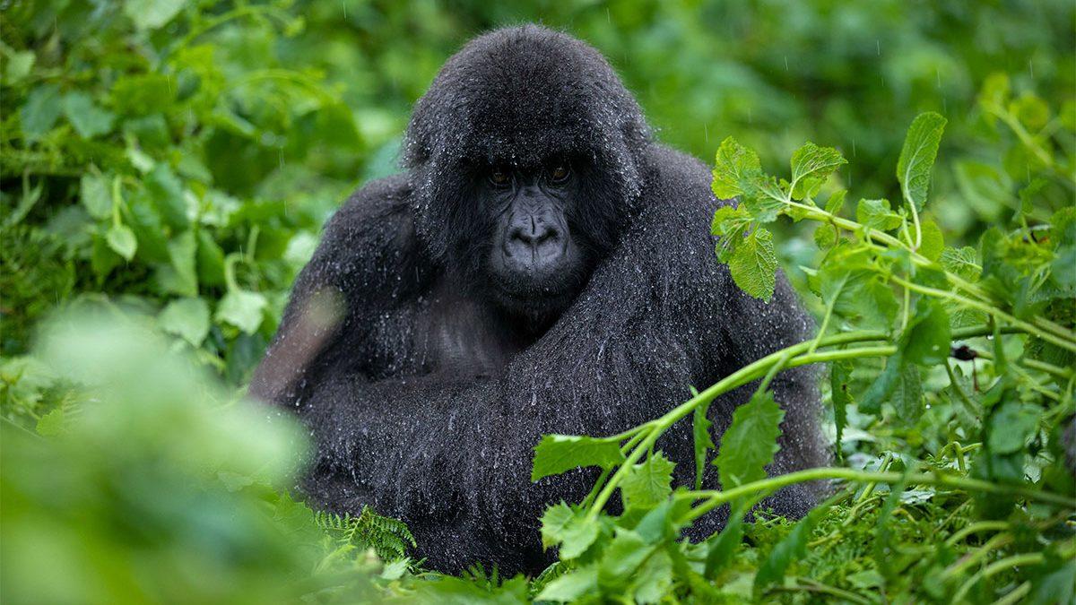 13 Days Uganda, Rwanda and Congo