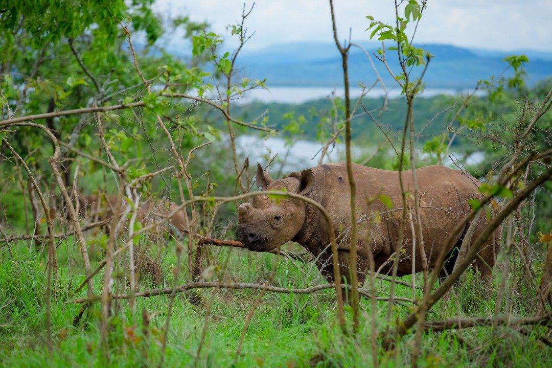 3 Days Akagera National Park safari