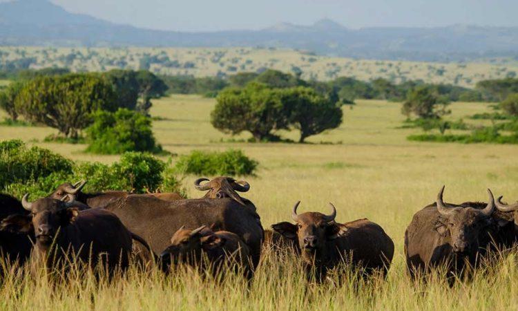 3 Days Queen Elizabeth Safari