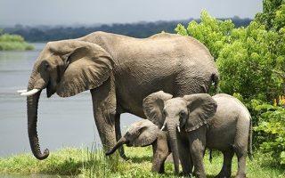 18 Days Best of Uganda Safari Tour