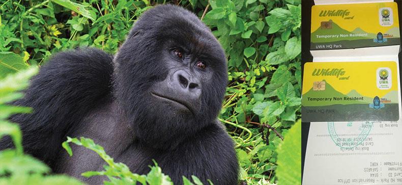 Gorilla Trekking Permits