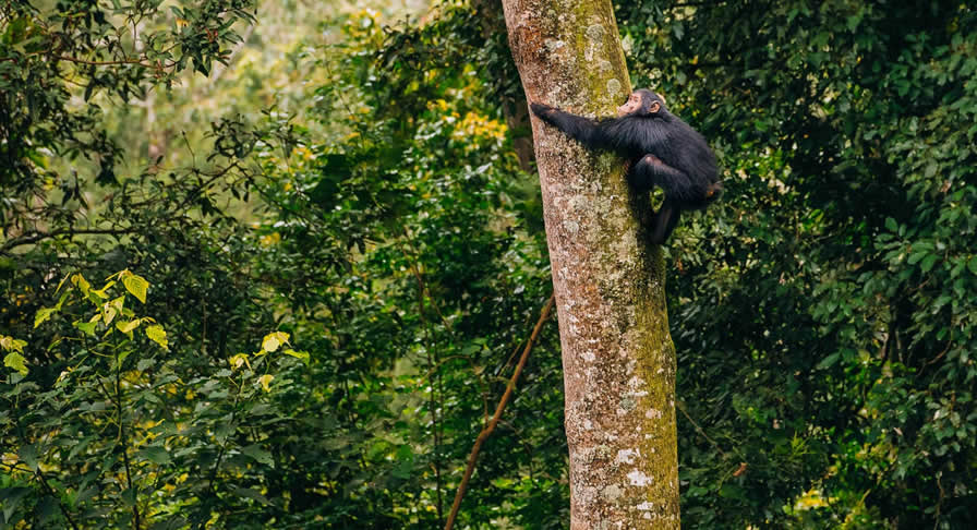 Getting to Nyungwe Forest National Park