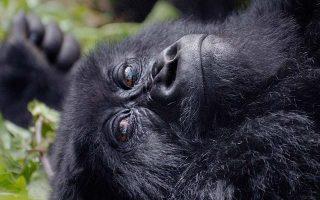 4 Days Volcanoes Gorilla Trekking & Lake Kivu tour