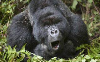 5 Days Volcanoes Gorilla Trekking & Akagera Wildlife Safari