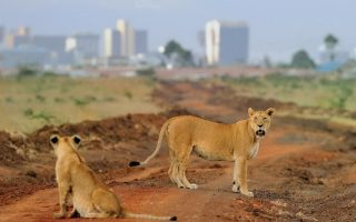 1 Day Nairobi National Park Safari