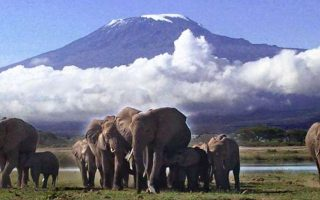 3 Days Amboseli Kenya Wildlife Safari