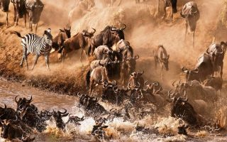 3 Days Maasai Mara Wildebeest Migration Safari