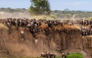3 Days Maasai Mara Wildlife Safari