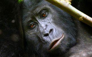7 days Best of Rwanda safari tour