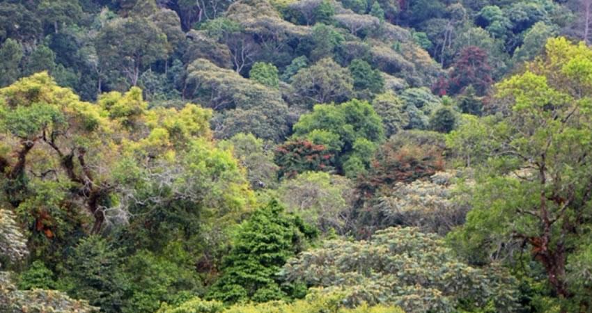 Kibira National Park
