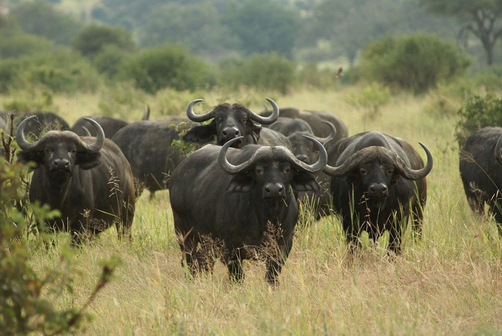 7 Days Best of Tanzania Safari