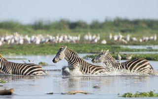 2 Days Lake Manyara and Ngorongoro Crater Safari
