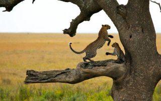 3 Days Best of Tanzania Wildlife Safari