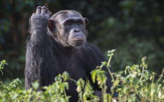 3 Days Kibira National Park Safari