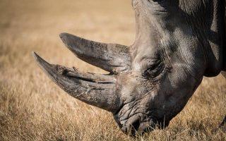 3 Days Ngorongoro Crater and Lake Eyasi Safari