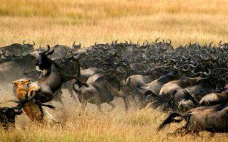 3 Days Serengeti Wildebeest Migration Safari