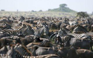 3 Days Serengeti and Ngorongoro Crater Safari