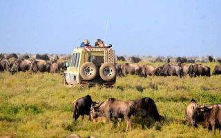 4 Days Serengeti, Lake Manyara, and Ngorongoro Safari
