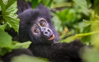5 Days Burundi and Rwanda Safari