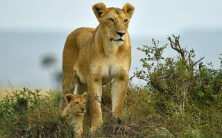 7 Days Best of Kenya Wildlife Safari