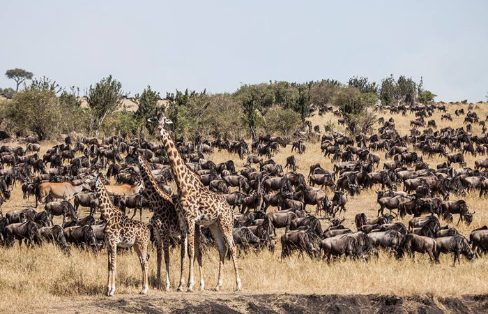 8 Days Luxury Wildebeest Migration Safari