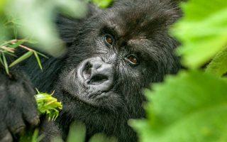 8 Days Uganda and Kenya Safari