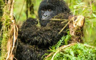 4 Days Queen Elizabeth & Bwindi Gorilla Tour