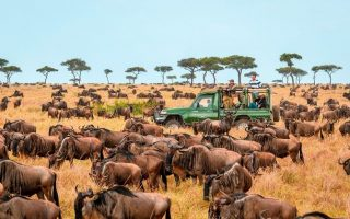 6 Days Maasai Mara and Serengeti Wildlife Safari