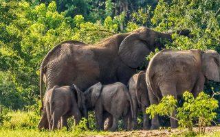 6 Days Queen Elizabeth & Bwindi Gorilla Tour