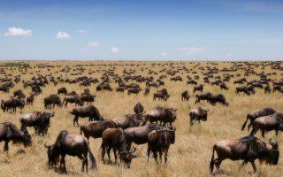 8 Days Luxury Wildebeest Migration Safari