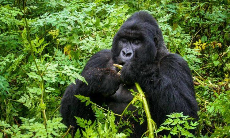16 Days Kenya Tanzania and Uganda Safari