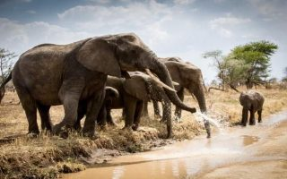 3 Days Tarangire and Manyara safari