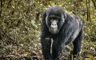 Tourism in the Democratic Republic of Congo