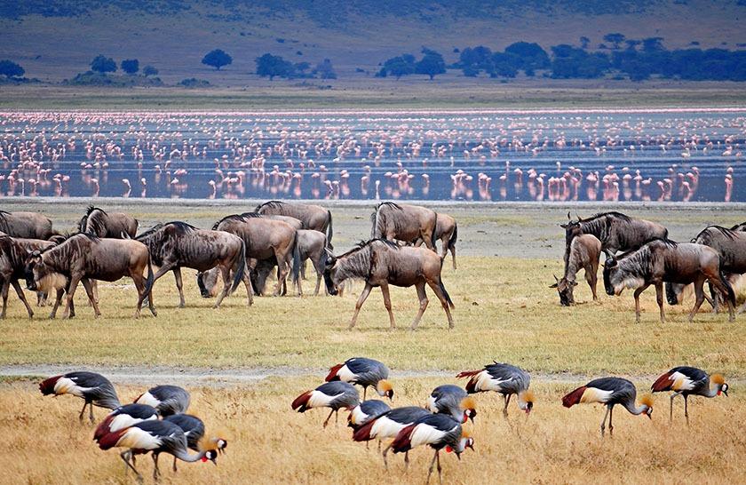 3 Days Tarangire and Manyara safari