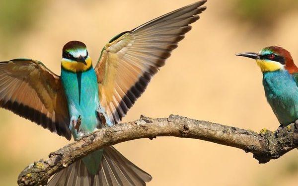 birding safaris in akagera national park