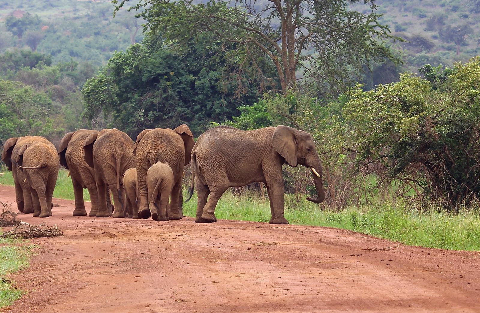 Virunga National Parks